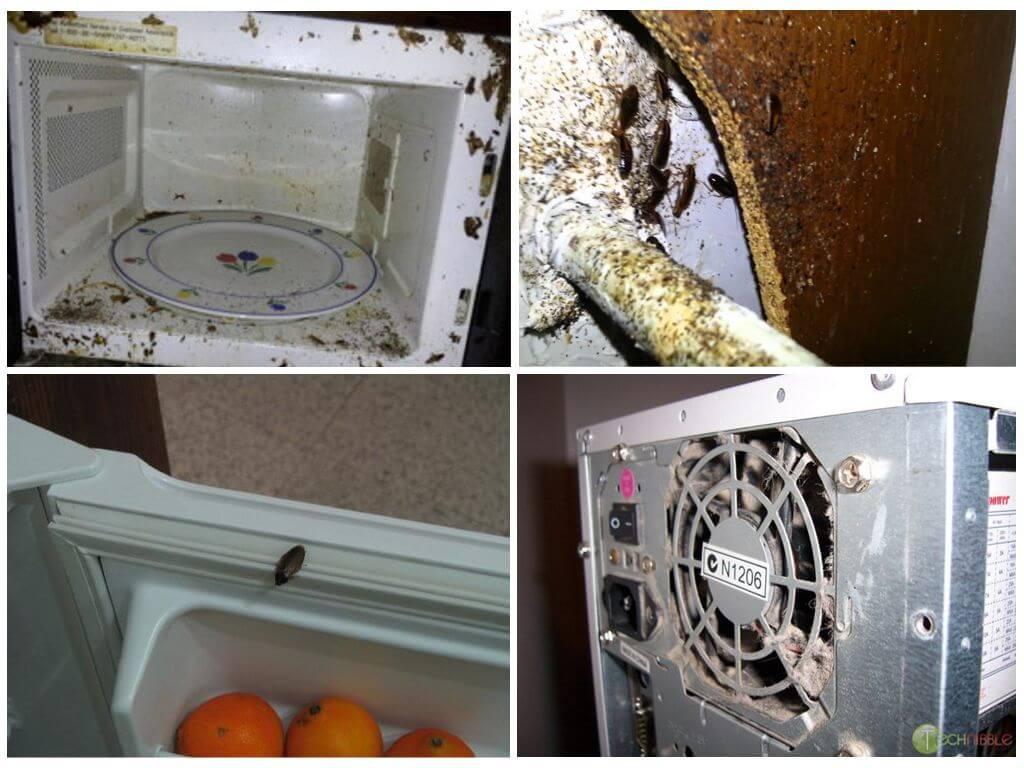Как избавиться от тараканов в микроволновке?