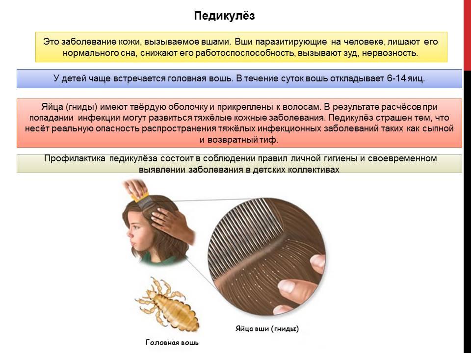 Профилактика педикулеза у детей и взрослых