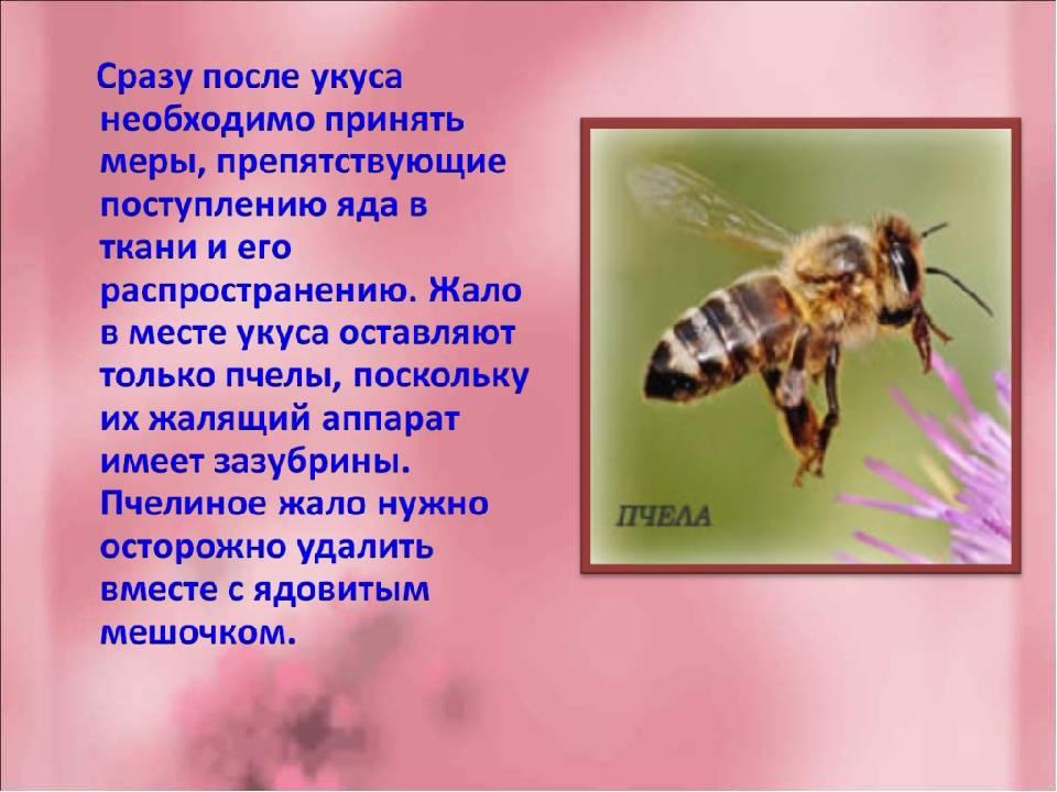 Для чего нужны осы в природе