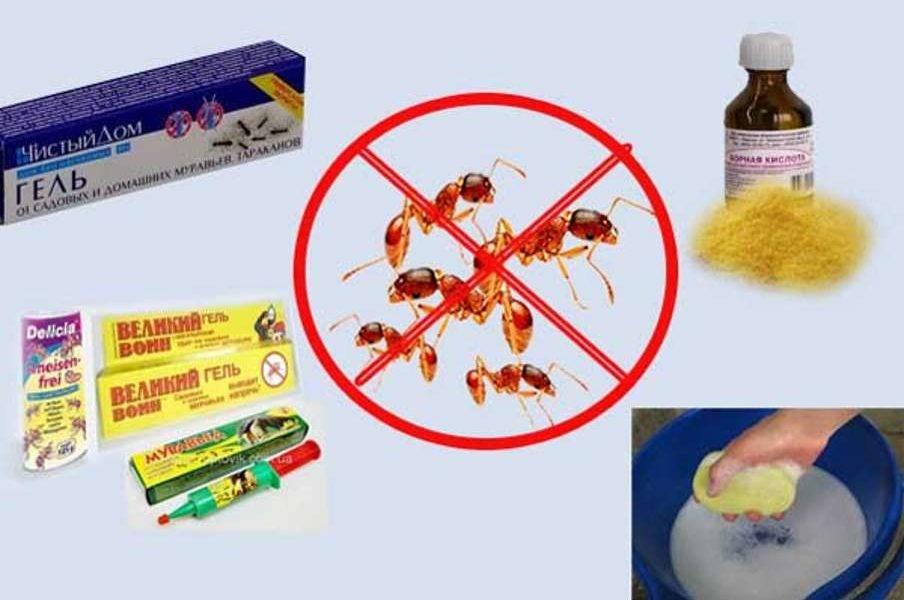 Как быстро (навсегда) избавиться от домашних, мелких,комнатных муравьев в квартире