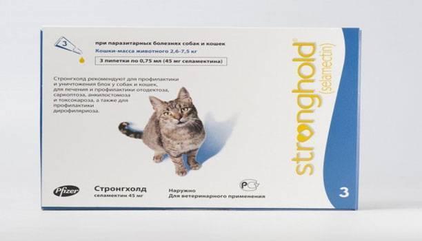 Власоеды у кошек: причины, симптомы, лечение и профилактика