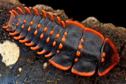 Доисторический червь с мощными челюстями жил на морском дне 20 млн лет назад: палеонтологи нашли его следы у берегов тайваня