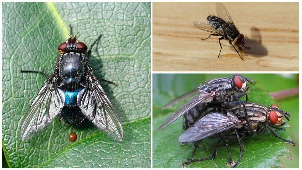 Как избавиться от мух: народные средства и бытовая химия