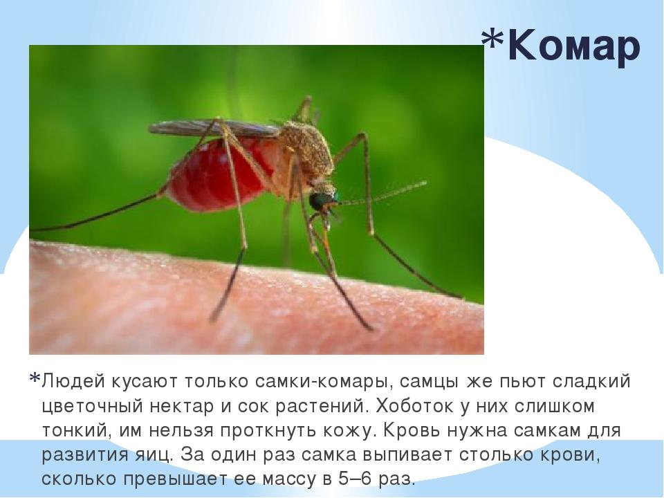 Почему комары кусают одних людей больше чем других