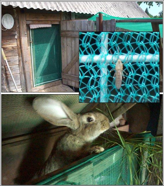 Как спасти кроликов от жары – несколько действенных способов