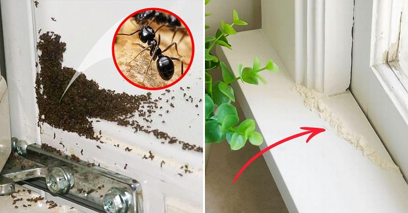 Как избавиться от муравьев в жилище раз и навсегда?