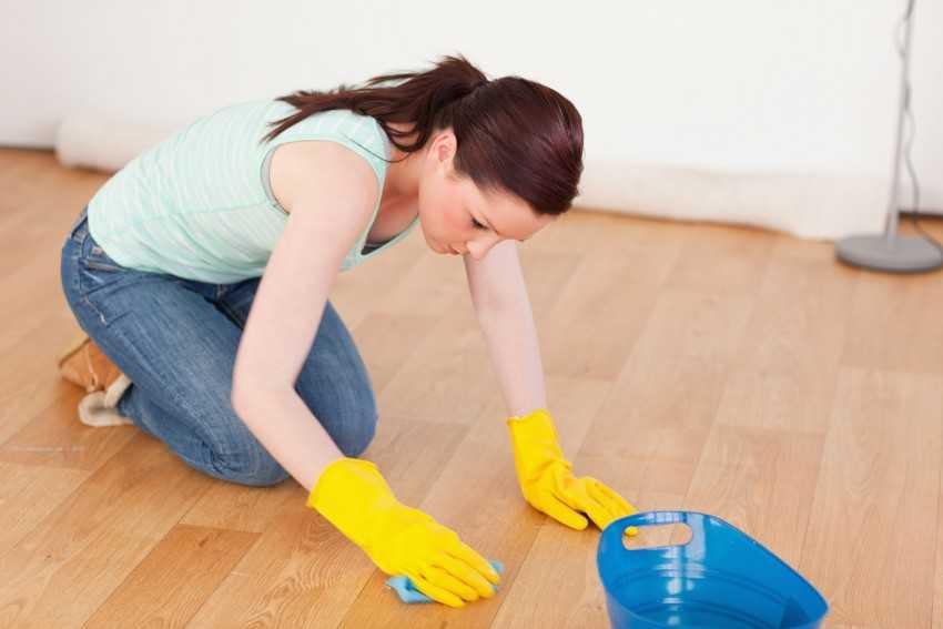Как избавиться от блох в квартире или доме самостоятельно в домашних условиях
