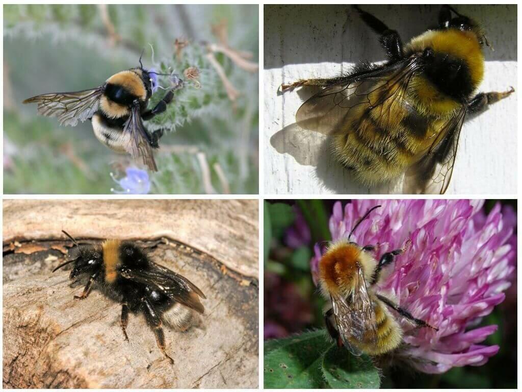 Как избавиться от пчел – лучшие средства и методы