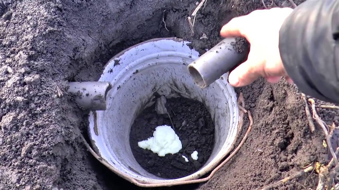 Как поймать крота на садовом участке: эффективные мотоды