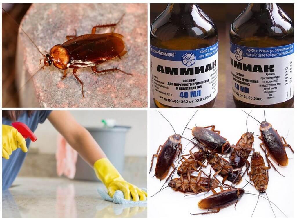Нашатырный спирт от тараканов - как вывести вредителей