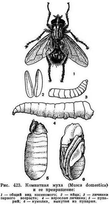 Жучок который светится в ночи. жуки-светляки — живые фонарики