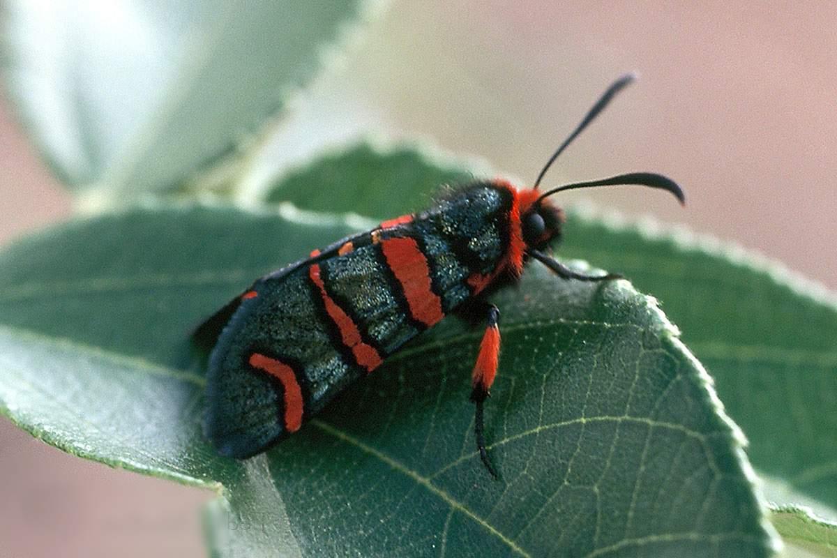 Пылесос или карбофос? как бороться с тополевой молью