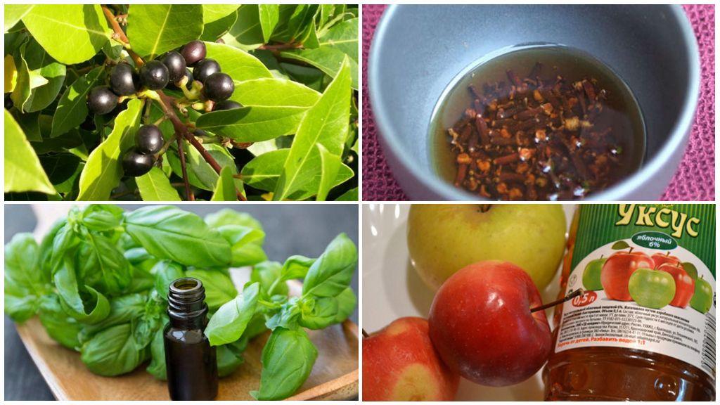 Как избавиться от мошек фруктовых в квартире: эффективные способы и методы, полезные рекомендации