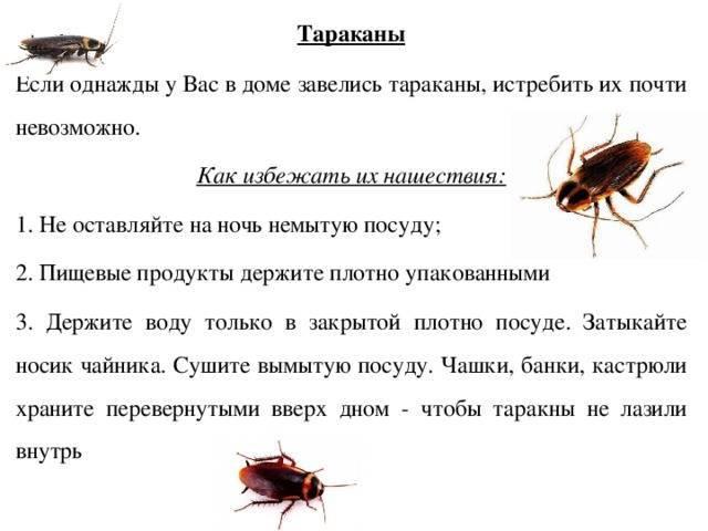 Сколько живут тараканы после дезинфекции