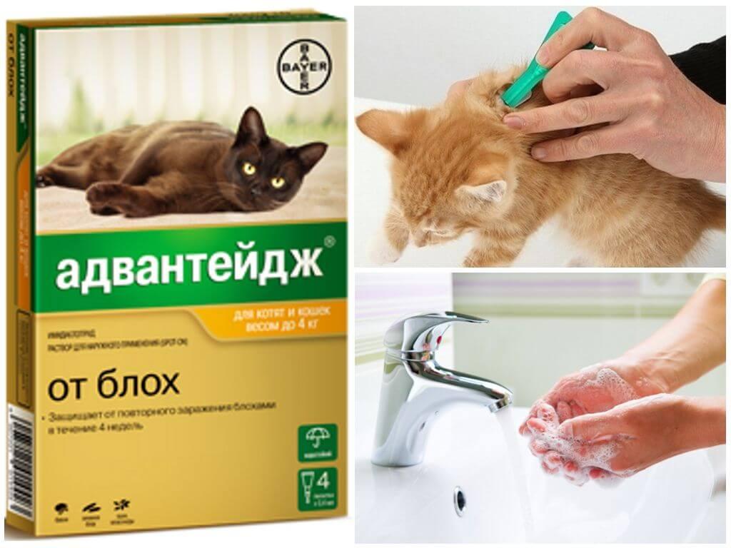 Отравление каплями от блох у котов