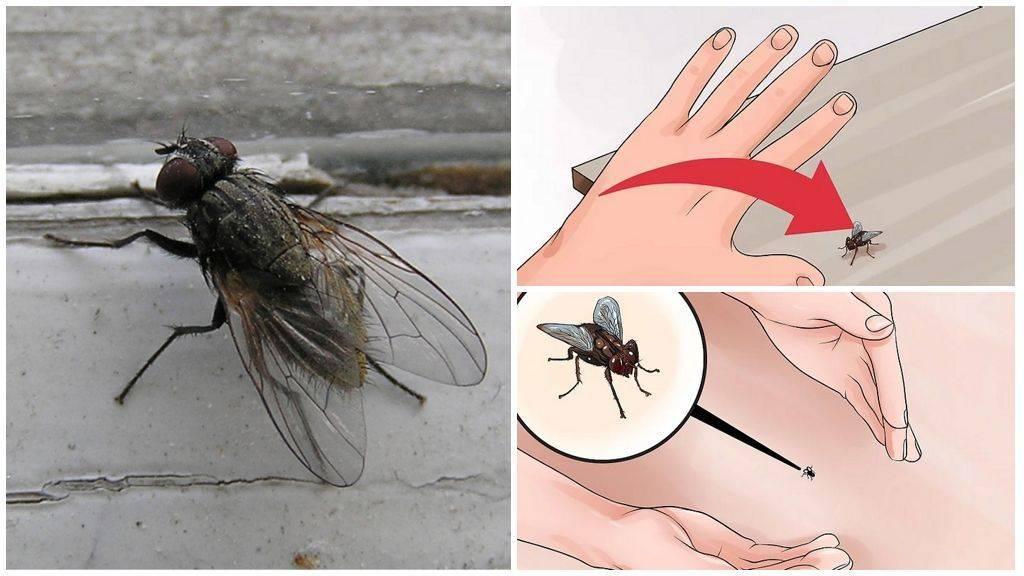 Лучшие народные средства от мух: гвоздика, пижма и водка