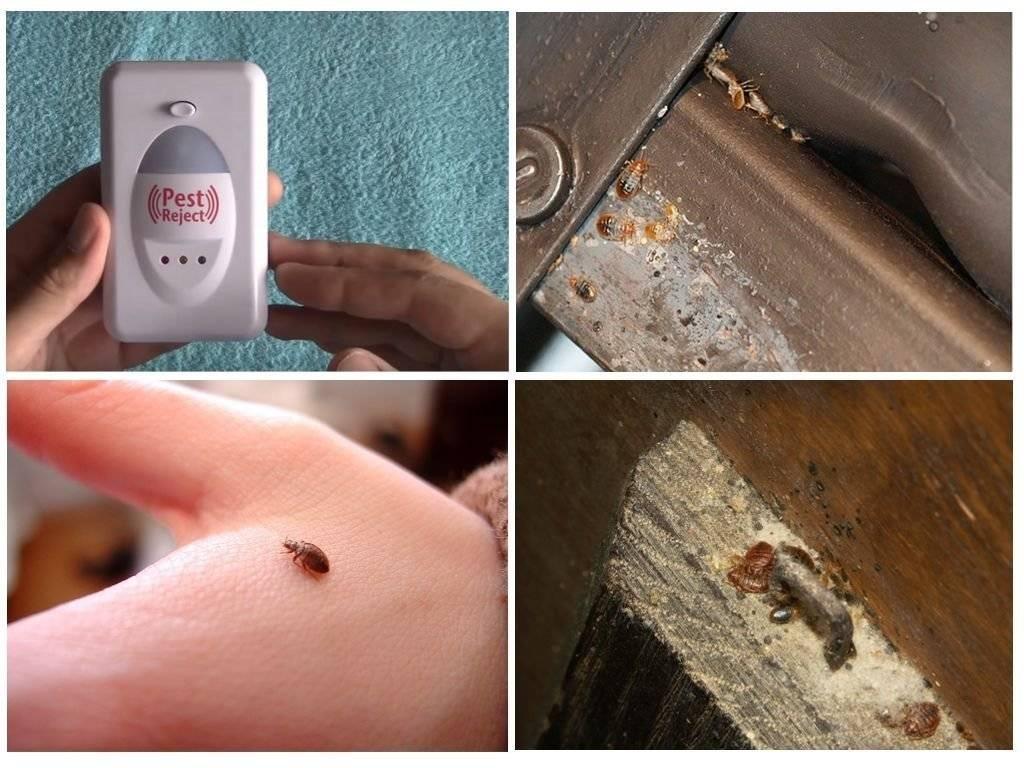 Pest reject от клопов – отзывы покупателей и описание отпугивателя