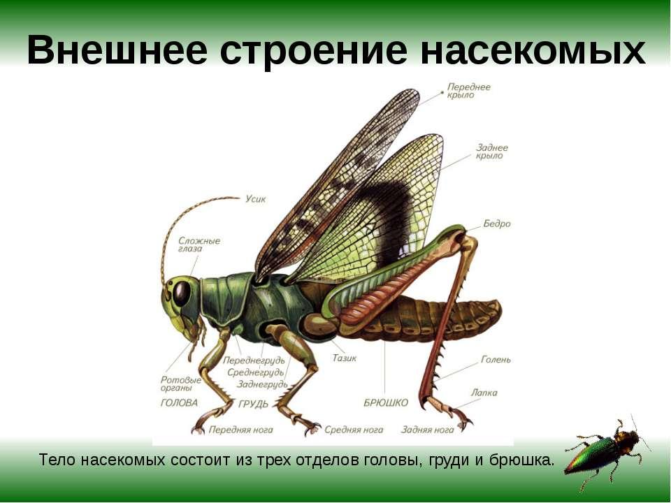 Как выглядят осы, фото и описание различных видов ос