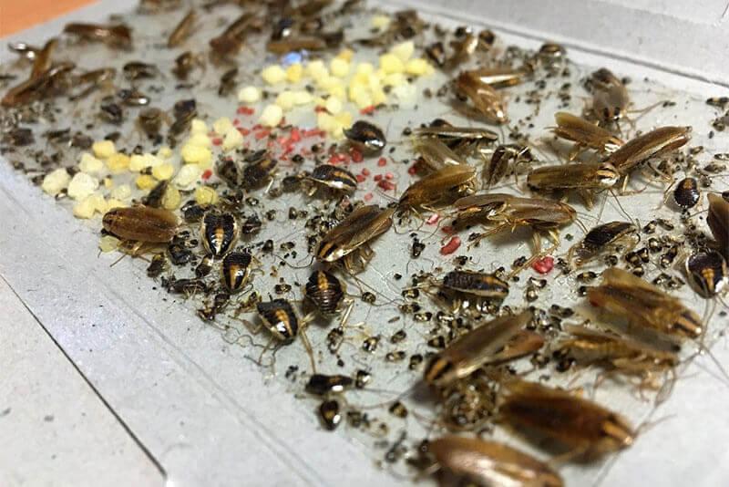Где прячутся тараканы