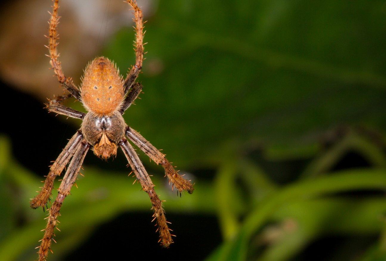 Представители паукообразных, многообразие класса и среда обитания по списку