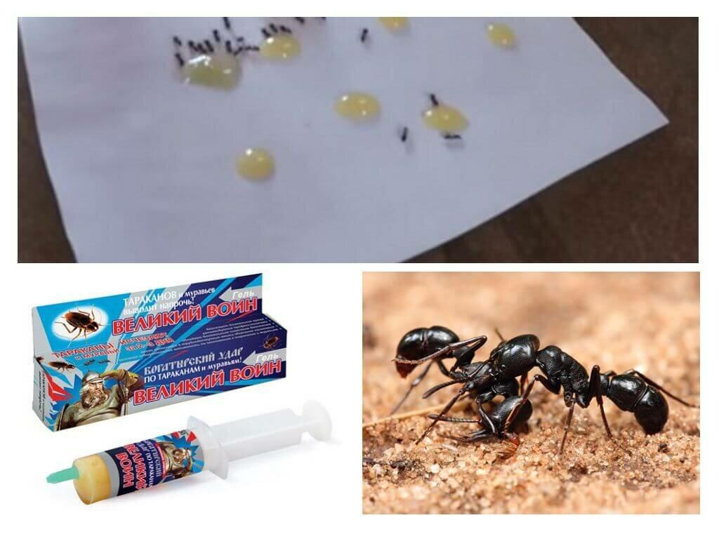 Как избавиться от муравьев в домашних условиях – методы, средства и рекомендации