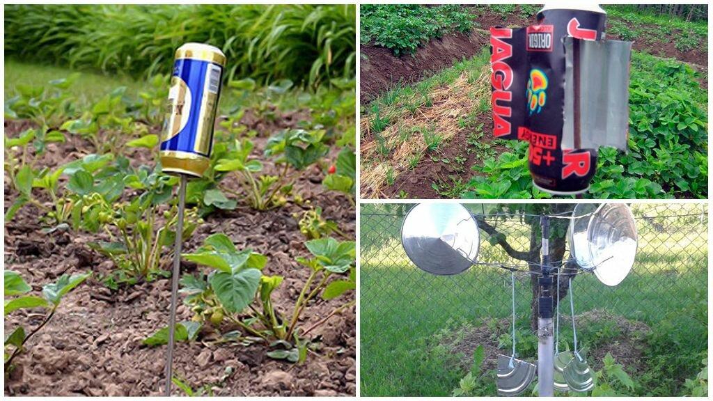 Технология избавления от кротов на участке, самый эффективны способ - огород, сад, балкон - медиаплатформа миртесен