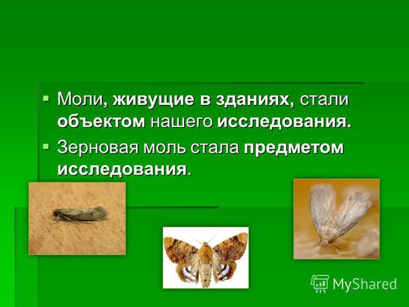 Моль – фото и особенности существования каждого вида