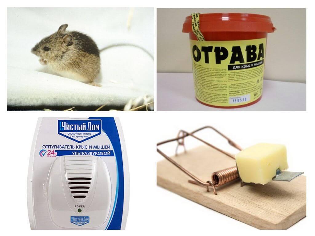 Отрава для мышей - лучшие препараты