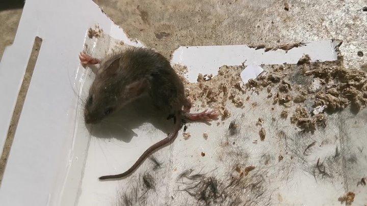 Как вывести мышей из машины и гаража: полезные советы