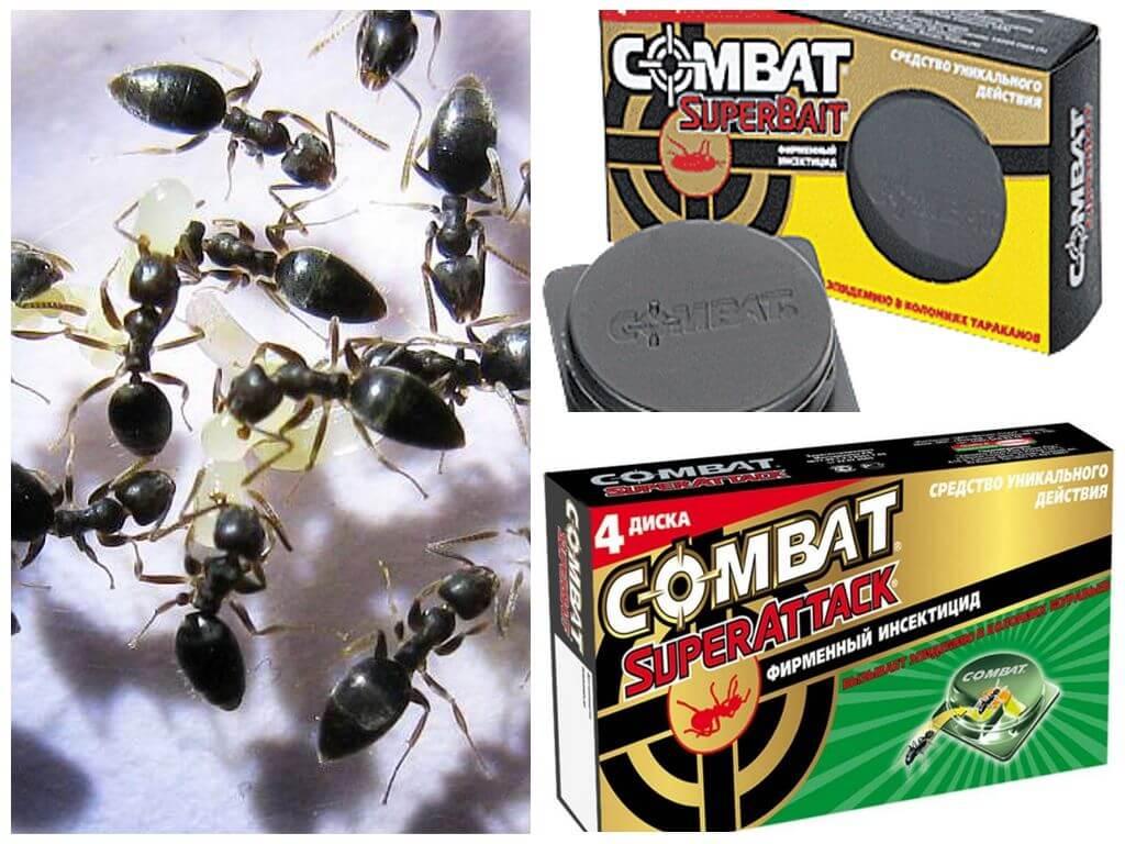 Как избавиться от муравьев в доме или в квартире: причины их появления, действующие средства для борьбы с ними и профилактические меры