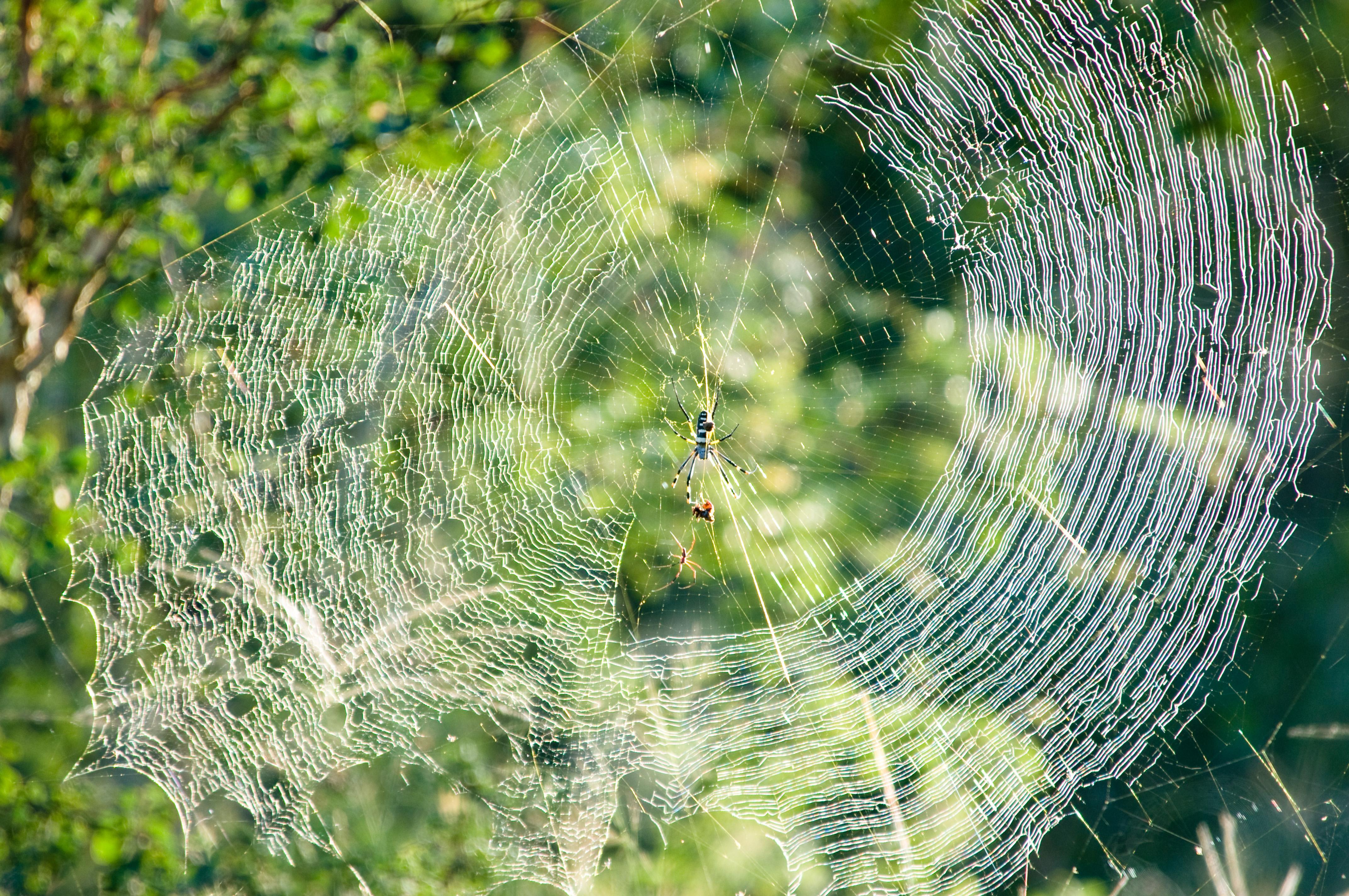 Как избавиться от паутины в доме, на балконе, на деревьях
