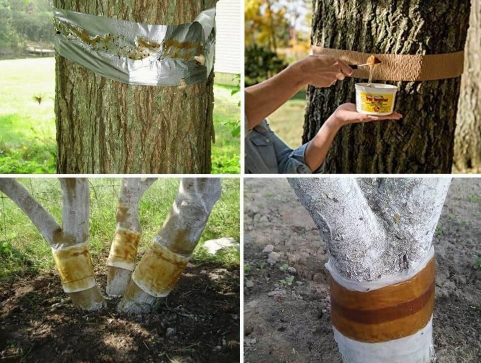 Чем обработать деревья от тли и муравьев