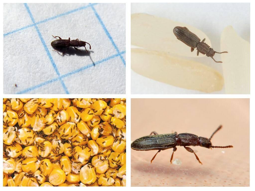 Как избавиться от жучков в муке и крупе: что делать, если завелись жуки?