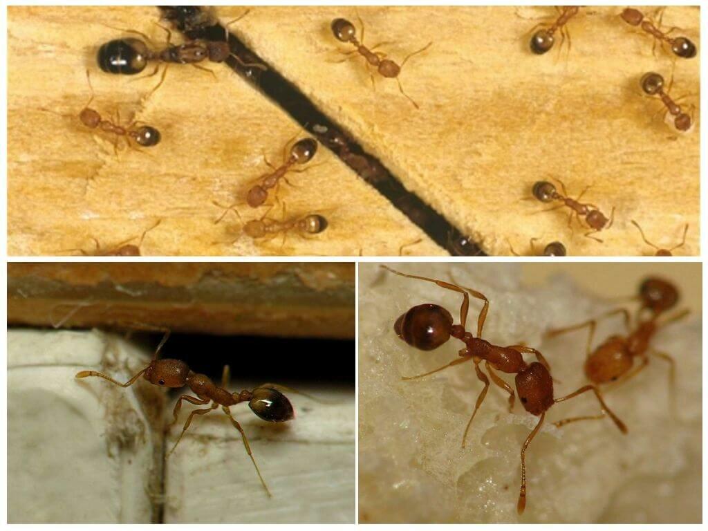 Какие бывают виды муравьев в россии и мире?