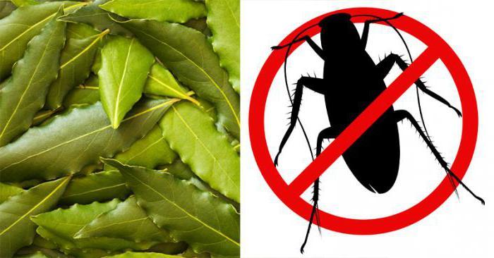 Лавровый лист от тараканов: как использовать и помогает ли в борьбе? отзывы