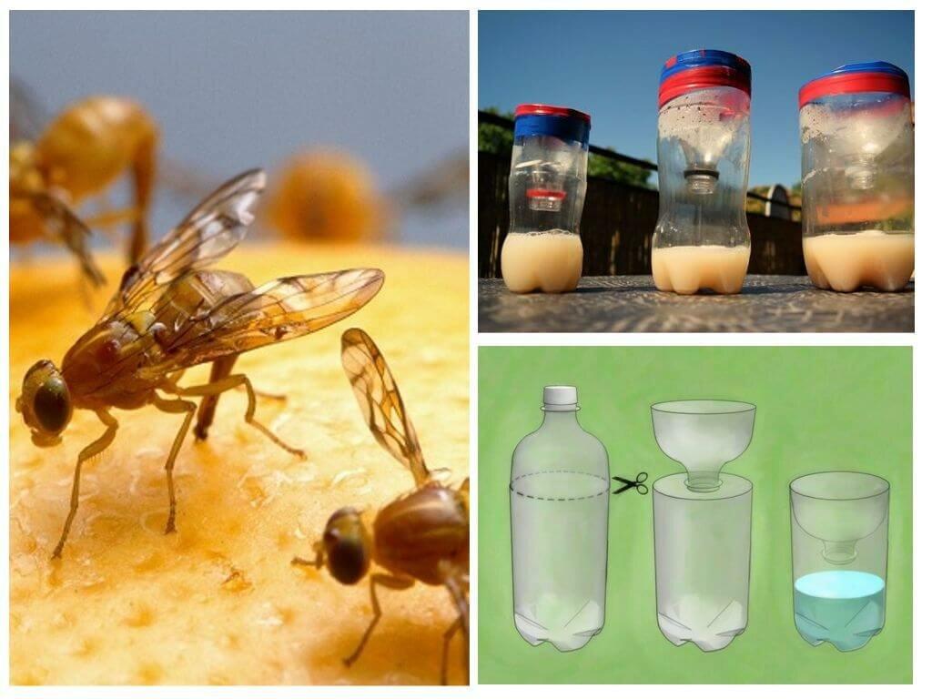Народные средства от мух - обзор эффективных составов с описанием, отзывами и фото
