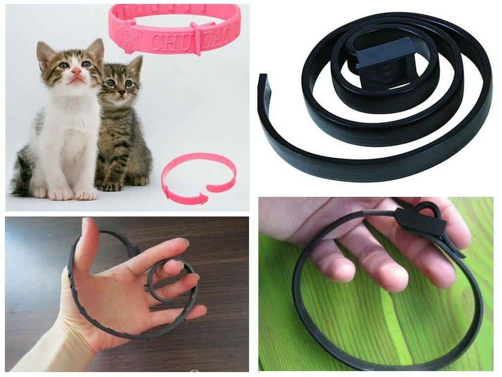 Ошейник для кошек: виды, назначение, принцип действия