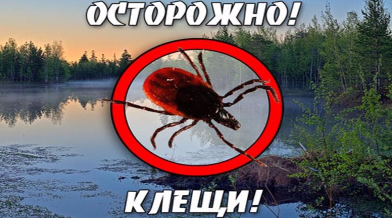 Есть ли в Крыму энцефалитные клещи: как избежать укусов, последствия