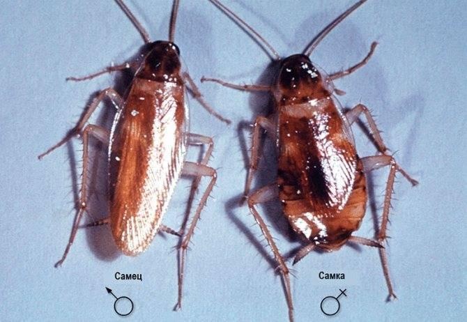 Корней чуковский — тараканище: стих