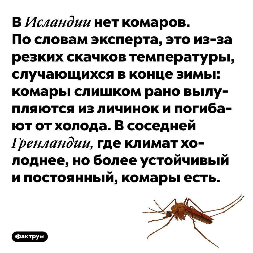 Где нет комаров и где их больше всего? комары в тайге, в москве и подмосковье