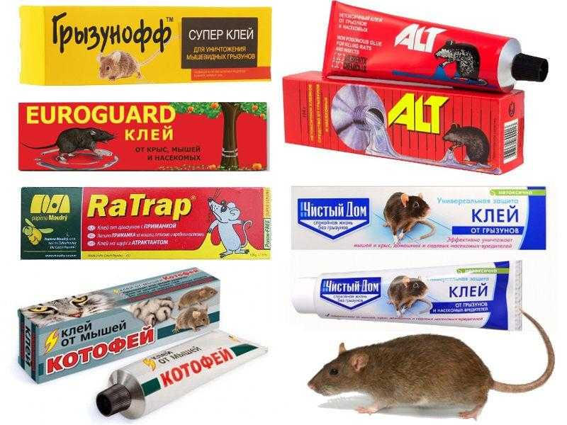 Клей для крыс и мышей обзор средств