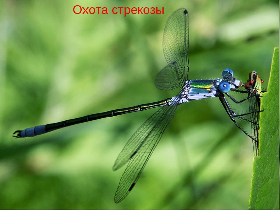 Кто питается комарами и их личинками: животные, птицы, пауки, растения