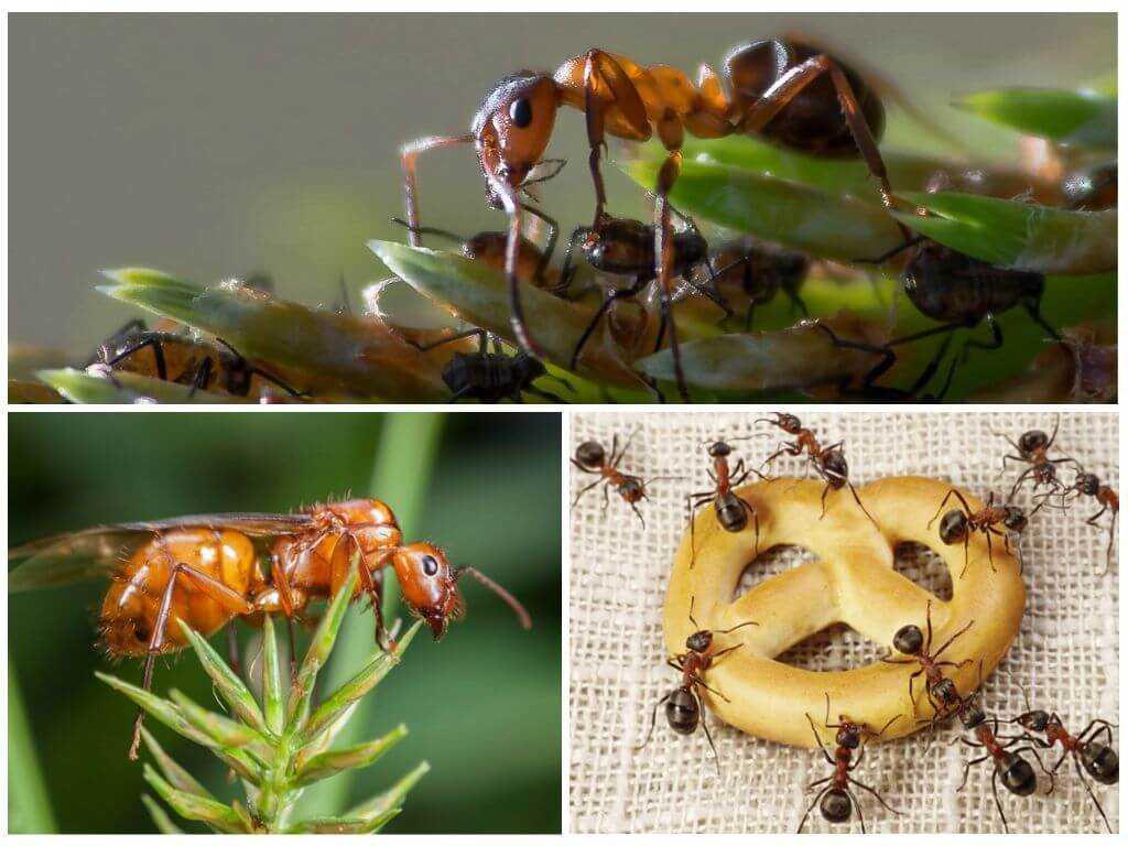Чем питаются речные раки: особенности рациона в природе и в домашних условиях
