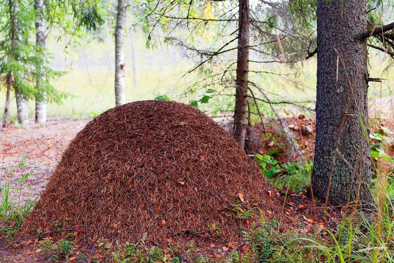 Сонник муравьи  приснились, к чему снятся муравьи во сне видеть?