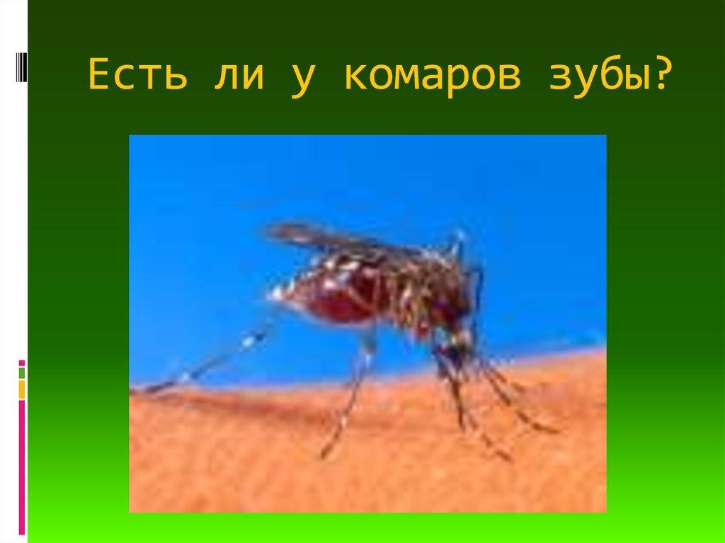 Как размножаются комары, чем питаются, сколько живут