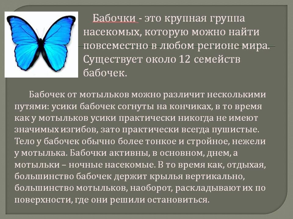 Стадии развития бабочек: как появляются, когда помогать опасно