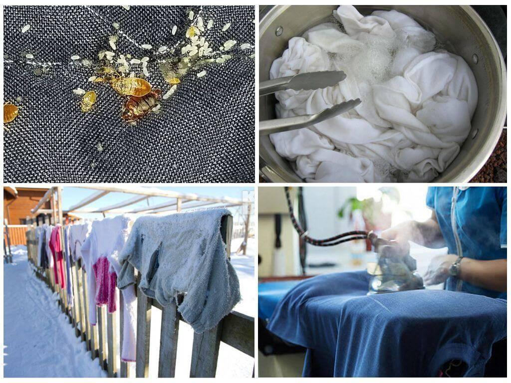 Живут ли клопы в одежде – как обнаружить и истребить