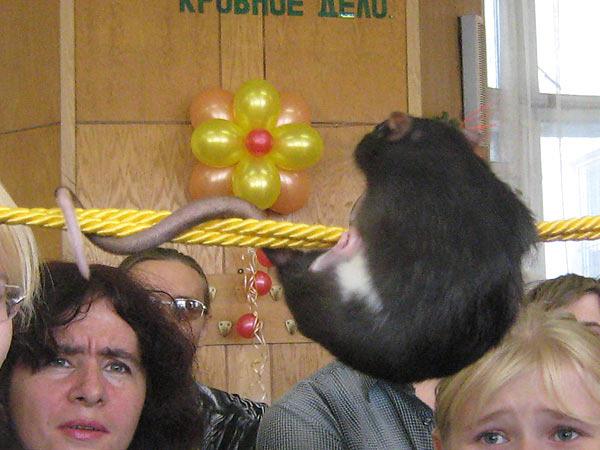 Хвост у крысы это позвоночника