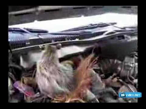 Как избавиться от мышей в машине, если они завелись