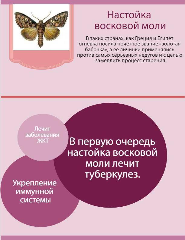 Экстракт восковой моли: лечебные свойства, применение и противопоказание, инструкция по применению